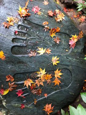Returning Home, A Fall Yoga Retreat