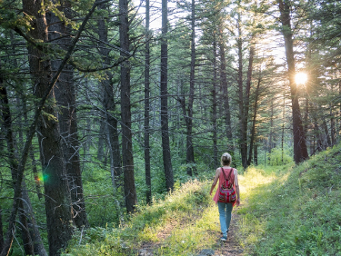 The Mindful Unplug - Forest Bathing
